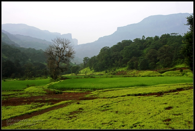 The fields of Ratanwadi.